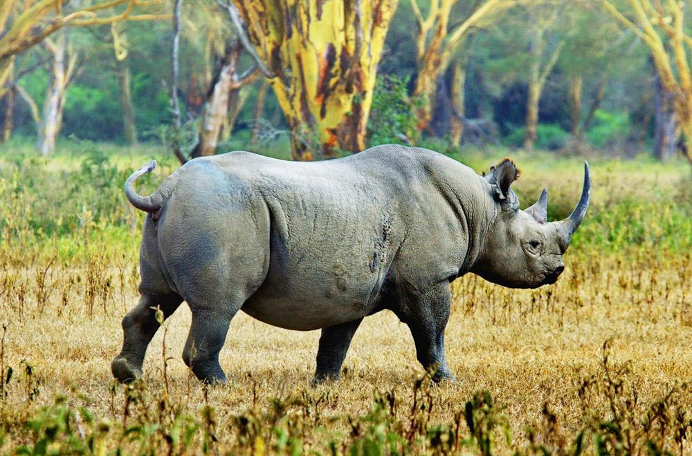 Tanzania Northern Safaris