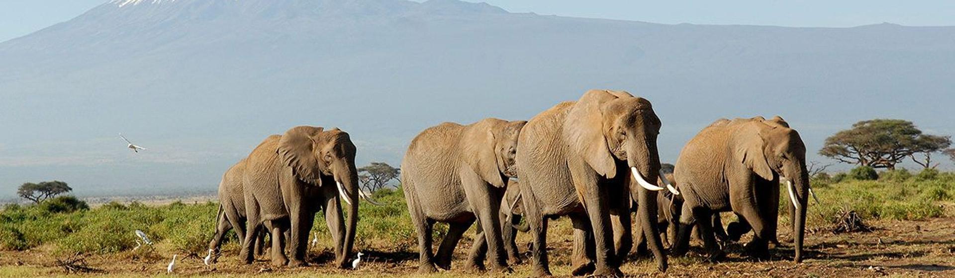 Kenya and Tanzania Wildlife Safari