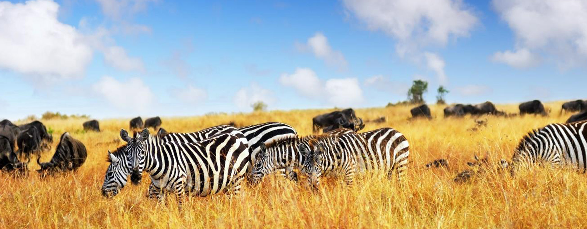 Explore the magical East Africa